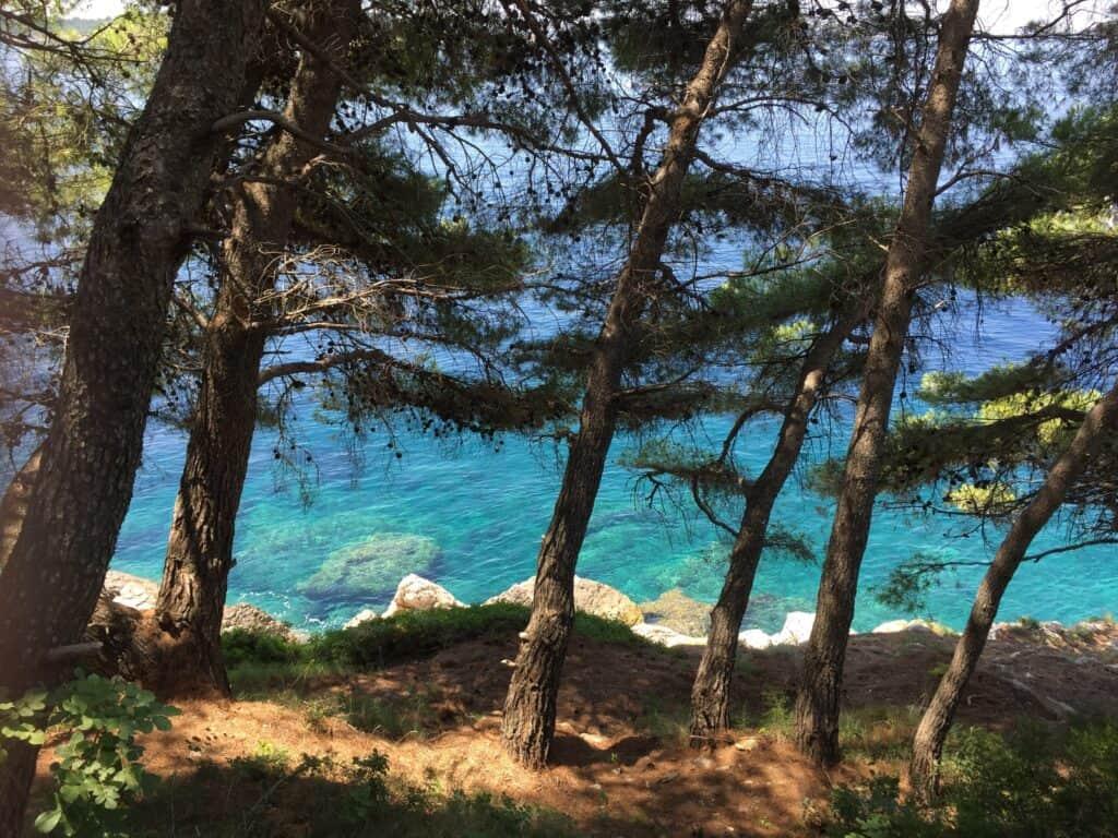 Hav og træer